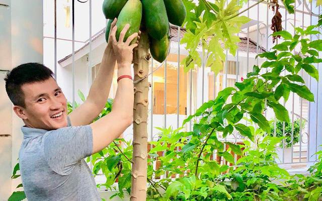 Cuộc sống giản đơn của vợ chồng Công Vinh - Thuỷ Tiên: Cùng nhau chăm sóc vườn rau sạch, tự tay thu hoạch củ quả, ăn không hết đem tặng hàng xóm - Ảnh 11.
