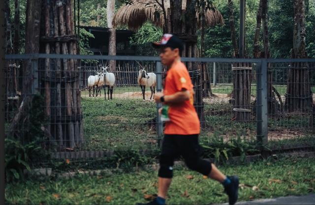 Đường đua WOW Marathon Vinpearl Phú Quốc - một mũi tên trúng nhiều đích: Vừa thoả cơn nghiện chạy, vừa tận hưởng trọn vẹn vẻ đẹp kỳ vĩ của đảo ngọc  - Ảnh 6.
