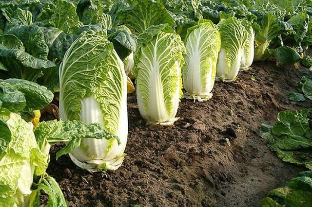 Bảo vệ sức khỏe vào mùa đông chỉ cần ăn nhiều 1 rau, 2 việc đúng giờ, tránh 3 quả và làm 4 điều  - Ảnh 1.