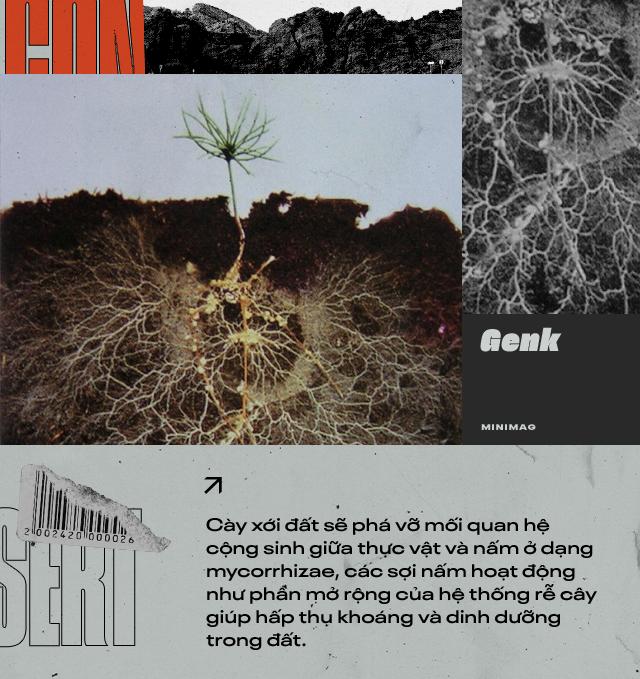 Đất sét nano: Công nghệ đột phá có thể biến sa mạc thành đồng ruộng trong 7 tiếng đồng hồ - Ảnh 2.