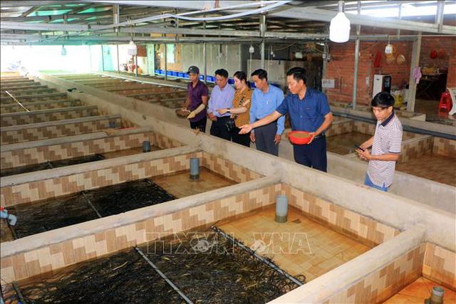 Bỏ chức Giám đốc, về quê nuôi lươn giống lãi tiền tỷ mỗi năm  - Ảnh 1.