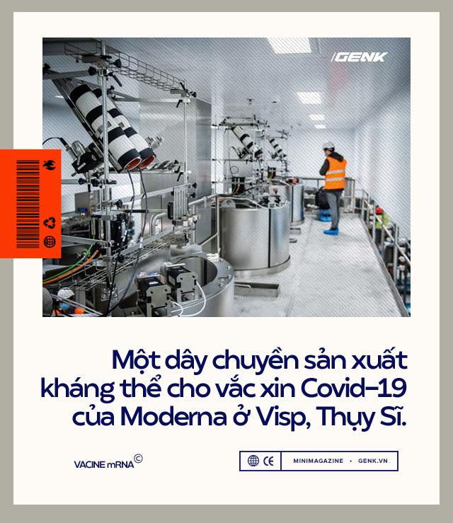 Vắc-xin mRNA: Từ sau Bức Màn Sắt Thế chiến II đến khoảnh khắc cứu thế giới khỏi COVID-19 - Ảnh 8.