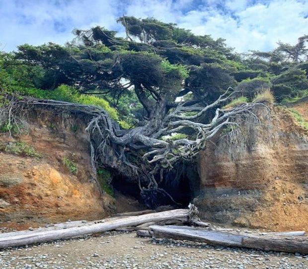 Những bức hình thiên nhiên thú vị và hiếm có tới nỗi xem xong còn chẳng hiểu là thật hay Photoshop - Ảnh 3.