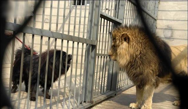 Sư tử thực sự không cần mất công gầm thét, người có năng lực càng không cần dùng lời nói để chứng minh  - Ảnh 3.