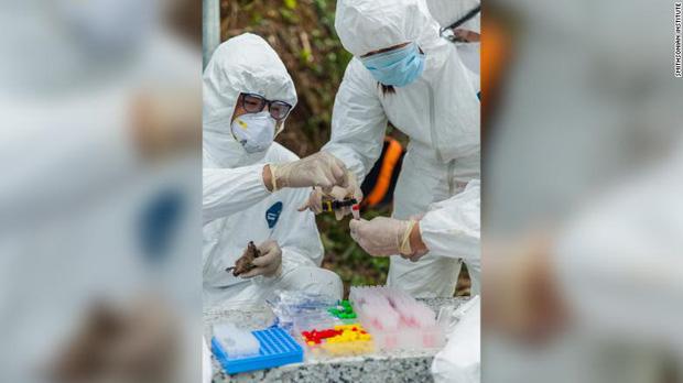 Chuyện về biệt đội săn dơi: Những người liều mạng với virus chết chóc nhất bậc nhất, phát hiện tổ tiên của Covid-19 từ nhiều năm trước - Ảnh 6.