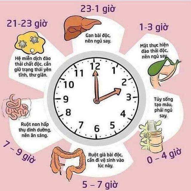 Một giấc ngủ ngon sánh ngang trăm thang thuốc bổ: Đây là tất cả những gì bạn cần biết để có thể khoẻ mạnh, trường thọ từ việc ngủ ngon  - Ảnh 1.