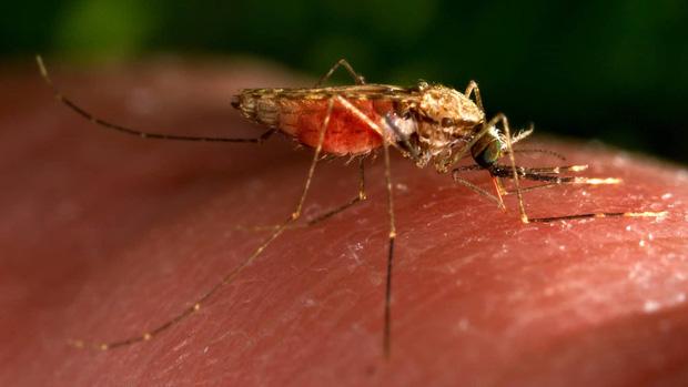 Nghề câu... muỗi kỳ lạ: Những người lấy chính cặp giò làm mồi nhử, ai cũng bất ngờ khi phát hiện lý do cao đẹp phía sau - Ảnh 1.
