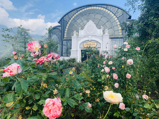 Việt Nam vừa có một thung lũng hoa hồng rộng 50.000 m2 được trao kỷ lục quốc gia, lại có thêm nơi để check-in hè này rồi!  - Ảnh 6.