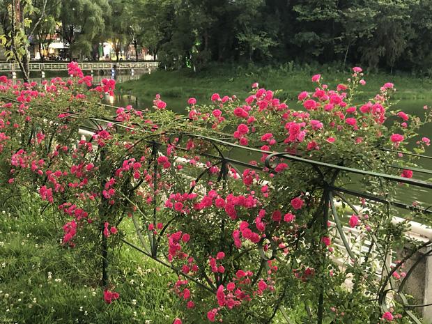 Việt Nam vừa có một thung lũng hoa hồng rộng 50.000 m2 được trao kỷ lục quốc gia, lại có thêm nơi để check-in hè này rồi!  - Ảnh 7.