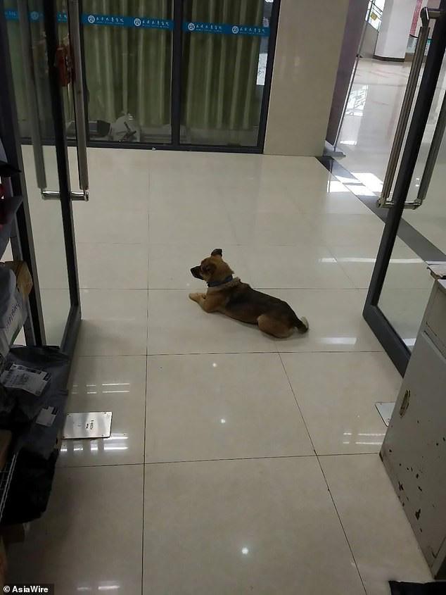 Chủ qua đời vì COVID-19, chó cưng vẫn chờ đợi suốt 3 tháng ở bệnh viện - Ảnh 1.