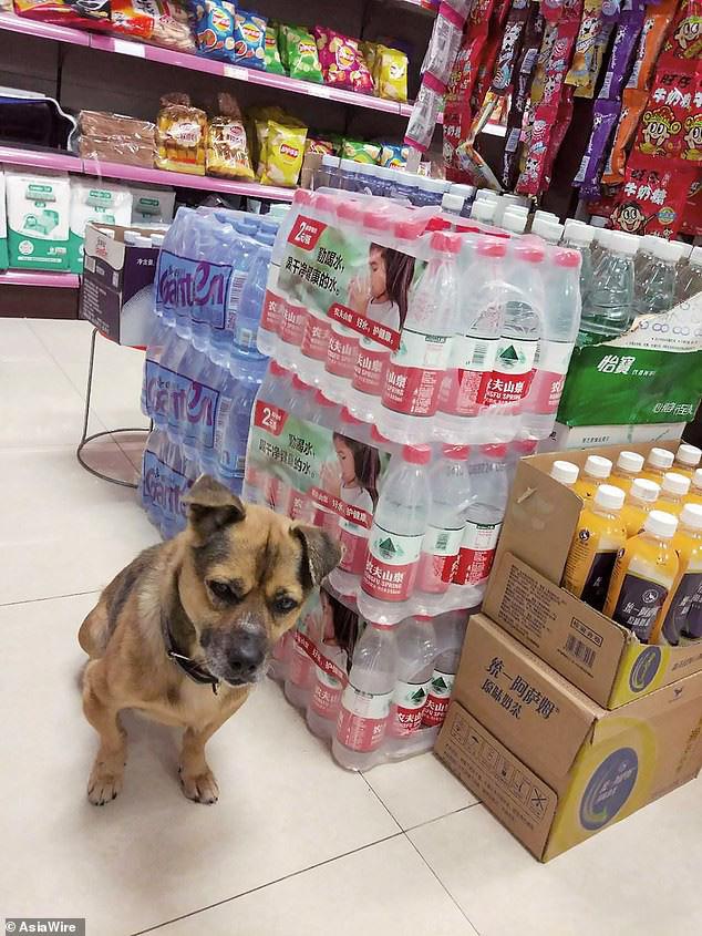 Chủ qua đời vì COVID-19, chó cưng vẫn chờ đợi suốt 3 tháng ở bệnh viện - Ảnh 2.