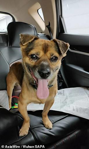 Chủ qua đời vì COVID-19, chó cưng vẫn chờ đợi suốt 3 tháng ở bệnh viện - Ảnh 3.