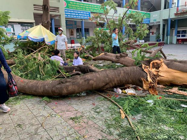 Ảnh: Cận cảnh hàng loạt cây xanh mục gốc, ngả hướng ra giữa đường ở Hà Nội - Ảnh 1.