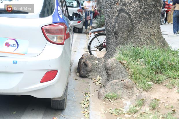 Ảnh: Cận cảnh hàng loạt cây xanh mục gốc, ngả hướng ra giữa đường ở Hà Nội - Ảnh 13.