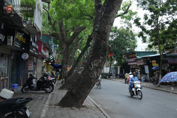 Ảnh: Cận cảnh hàng loạt cây xanh mục gốc, ngả hướng ra giữa đường ở Hà Nội - Ảnh 9.