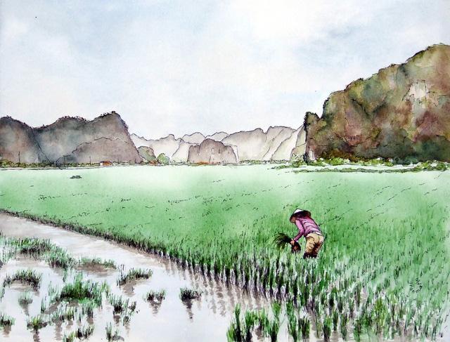 Bộ tranh đẹp quá Việt Nam ơi được vẽ bởi họa sĩ người Pháp, cộng đồng mạng quốc tế thích thú ngắm nhìn một nơi bình dị, an yên nhưng rất tươi đẹp  - Ảnh 4.