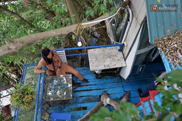 Ngay Hà Nội có một căn nhà cheo leo trên đỉnh ngọn cây của người họa sĩ 61 tuổi: Gần 20 năm trồng và đợi cây lớn - Ảnh 13.