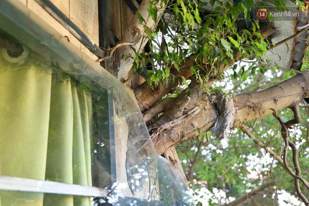 Ngay Hà Nội có một căn nhà cheo leo trên đỉnh ngọn cây của người họa sĩ 61 tuổi: Gần 20 năm trồng và đợi cây lớn - Ảnh 14.