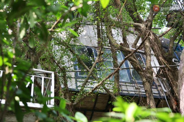 Ngay Hà Nội có một căn nhà cheo leo trên đỉnh ngọn cây của người họa sĩ 61 tuổi: Gần 20 năm trồng và đợi cây lớn - Ảnh 17.