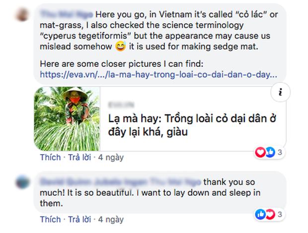 """Bộ ảnh đồng cỏ Việt Nam """"lượn sóng"""" đang gây bão mạng quốc tế, nhưng cả ngàn người nước ngoài lại bị nhầm lẫn ở một điểm này  - Ảnh 4."""