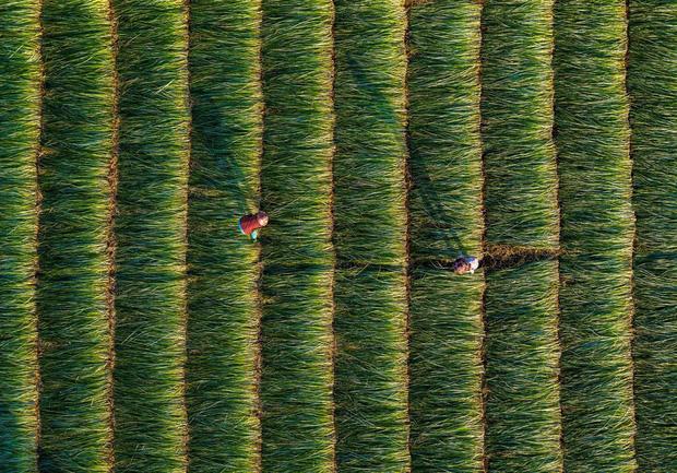 """Bộ ảnh đồng cỏ Việt Nam """"lượn sóng"""" đang gây bão mạng quốc tế, nhưng cả ngàn người nước ngoài lại bị nhầm lẫn ở một điểm này  - Ảnh 9."""