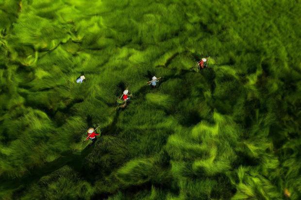 """Bộ ảnh đồng cỏ Việt Nam """"lượn sóng"""" đang gây bão mạng quốc tế, nhưng cả ngàn người nước ngoài lại bị nhầm lẫn ở một điểm này  - Ảnh 10."""