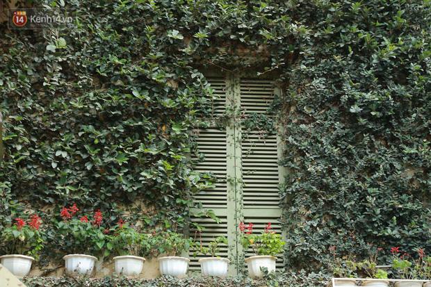 Ảnh: Ngắm ngôi biệt thự 3 tầng phủ kín dây leo chằng chịt ở Hà Nội - Ảnh 6.
