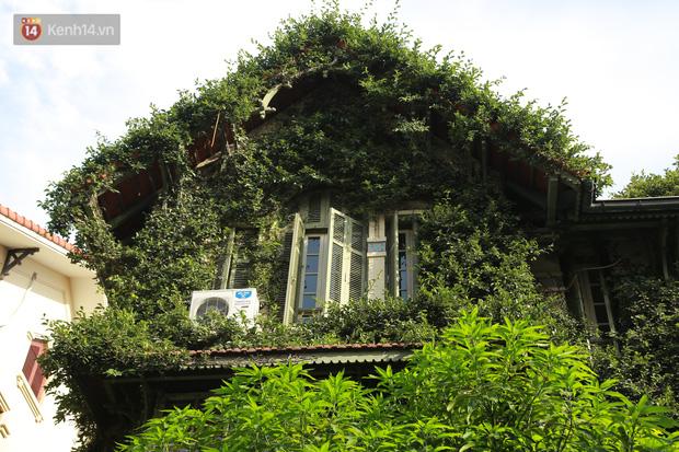 Ảnh: Ngắm ngôi biệt thự 3 tầng phủ kín dây leo chằng chịt ở Hà Nội - Ảnh 7.