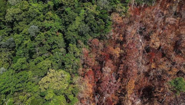 Dù thế giới đình trệ do COVID-19, hệ sinh thái của Trái Đất vẫn đang bị đe dọa nghiêm trọng - Ảnh 2.