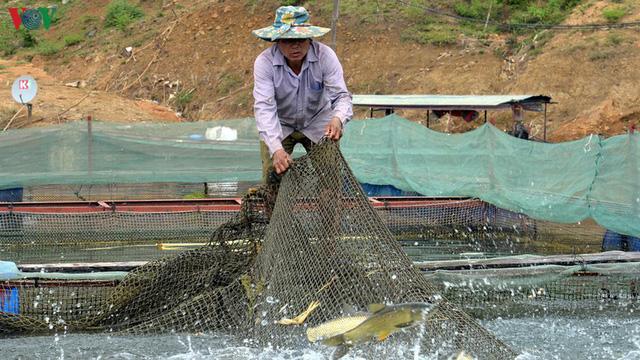 Thoát nghèo từ nuôi cá lồng trên lòng hồ thủy điện Sơn La  - Ảnh 2.