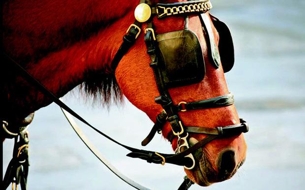 Profile siêu xịn của ngựa được đội Kỵ binh cảnh sát cơ động Việt Nam sử dụng: Là ngựa nòi Mông Cổ, thuộc một trong những giống đỉnh nhất thế giới - Ảnh 4.