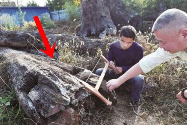 Mang khúc gỗ xấu xí về vứt ở góc vườn, 5 năm sau người đàn ông choáng váng phát hiện đó là cả gia tài trị giá 66 tỷ đồng - Ảnh 1.