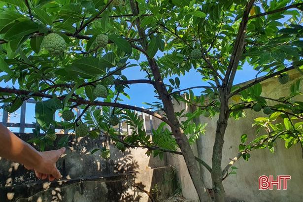 Nông dân Hà Tĩnh tưới cây... bằng smartphone! - Ảnh 3.