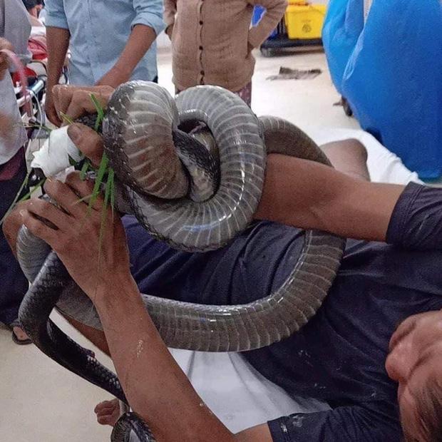 Gia cảnh khó khăn của người đàn ông cầm đầu rắn hổ mang vào bệnh viện cấp cứu: Bị tai nạn giao thông, đi bắt rắn chạy ăn từng bữa - Ảnh 3.