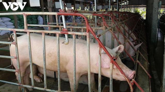 Giá lợn hơi xuống quanh mức 80.000 đồng/kg, nhiều địa phương tái đàn 100%  - Ảnh 1.
