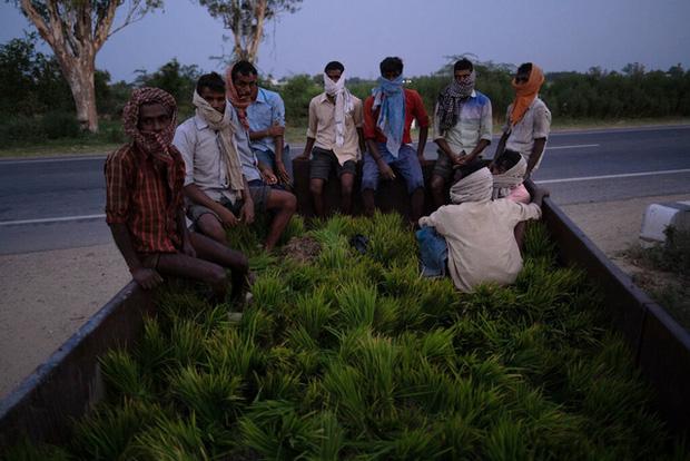 Khủng hoảng chồng khủng hoảng: Nhiều nông dân Ấn Độ tự tử trong đại dịch COVID-19 - Ảnh 3.