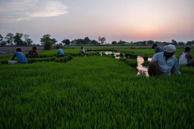 Khủng hoảng chồng khủng hoảng: Nhiều nông dân Ấn Độ tự tử trong đại dịch COVID-19 - Ảnh 4.