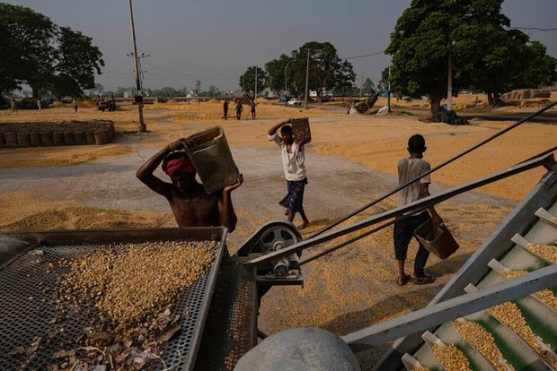 Khủng hoảng chồng khủng hoảng: Nhiều nông dân Ấn Độ tự tử trong đại dịch COVID-19 - Ảnh 6.