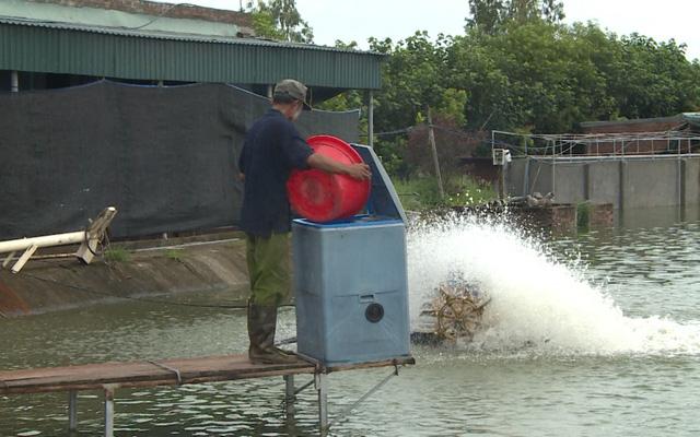 Chàng trai bỏ công việc lương cao về quê nuôi cá khổng lồ: Không phải ai chán thành phố cũng về quê nuôi cá và trồng thêm rau được đâu! - Ảnh 1.