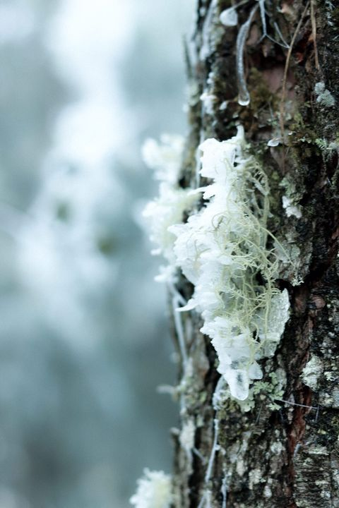 Những khoảnh khắc băng tuyết phủ trắng Y Tý - Sapa, hoa đào nở đóng băng đẹp như cổ tích là dịp vô cùng hiếm hoi để du lịch vào thời điểm này! - Ảnh 13.