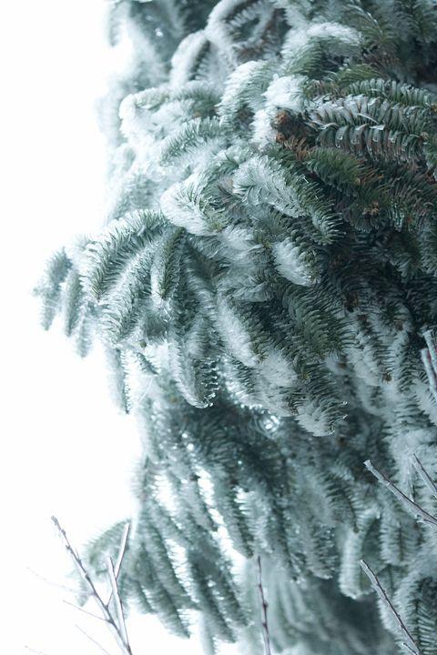 Những khoảnh khắc băng tuyết phủ trắng Y Tý - Sapa, hoa đào nở đóng băng đẹp như cổ tích là dịp vô cùng hiếm hoi để du lịch vào thời điểm này! - Ảnh 14.