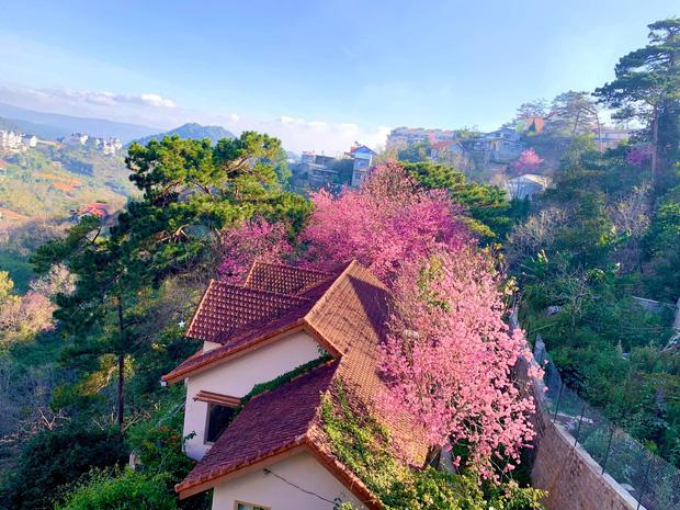 Rời Sài Gòn, cặp vợ chồng lên Đà Lạt xây ngôi nhà hướng mặt ra thung lũng, nhìn vườn hoa đào đẹp như cổ tích mà mê mệt - Ảnh 1.