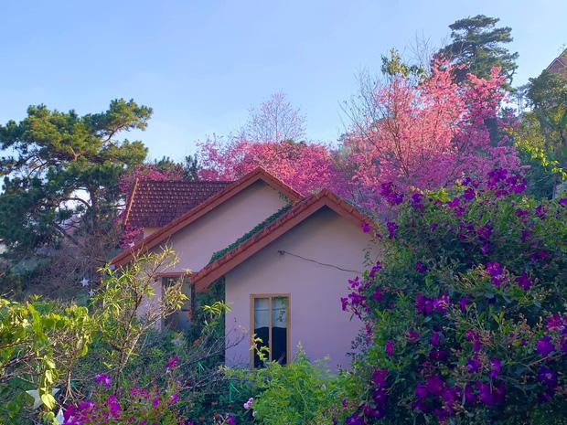 Rời Sài Gòn, cặp vợ chồng lên Đà Lạt xây ngôi nhà hướng mặt ra thung lũng, nhìn vườn hoa đào đẹp như cổ tích mà mê mệt - Ảnh 2.