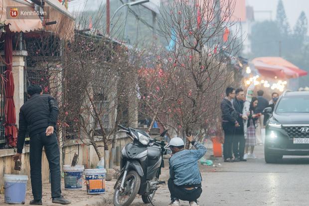 Ảnh: Trời lạnh sương mờ, làng đào Nhật Tân khoe sắc, đúng là Tết đang đến rất gần rồi! - Ảnh 15.
