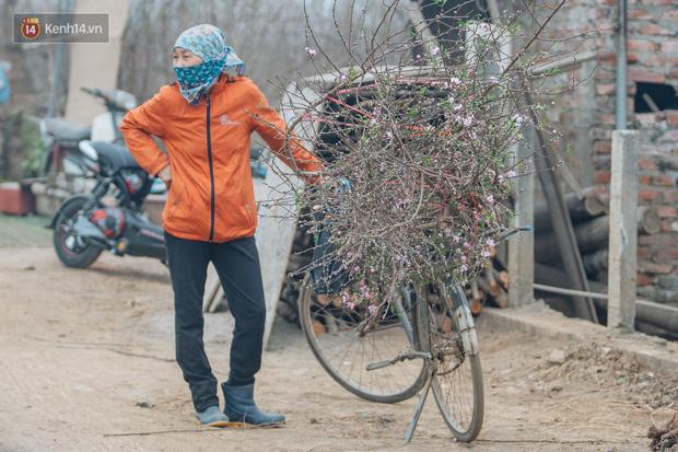 Ảnh: Trời lạnh sương mờ, làng đào Nhật Tân khoe sắc, đúng là Tết đang đến rất gần rồi! - Ảnh 7.