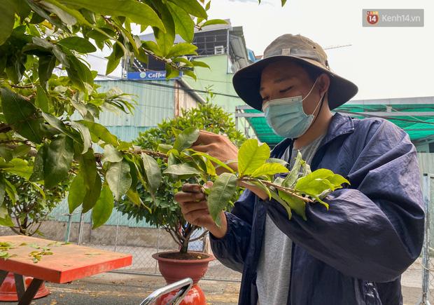 Bỏ 200 triệu thuê 30 người lặt lá mai vài ngày đón Tết Tân Sửu 2021 - Ảnh 8.