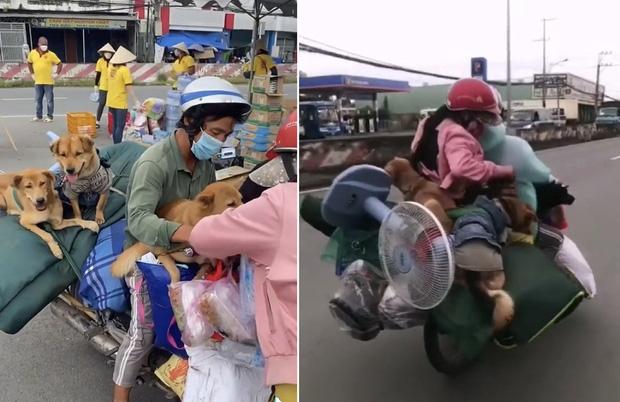 Đôi vợ chồng chở 15 chú chó theo về quê bị tiêu hủy: Thương chúng như con, làm được 250k thì dành 100k mua thức ăn cho chúng - Ảnh 1.