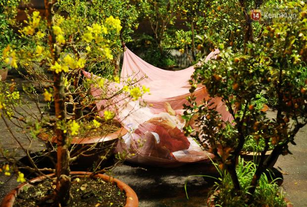 Xót xa cảnh tiểu thương căng lều bạt, vật vạ trắng đêm ở công viên canh hoa Tết: Ế ẩm nhưng cố bán hết ngày 30 để vớt vát - Ảnh 16.