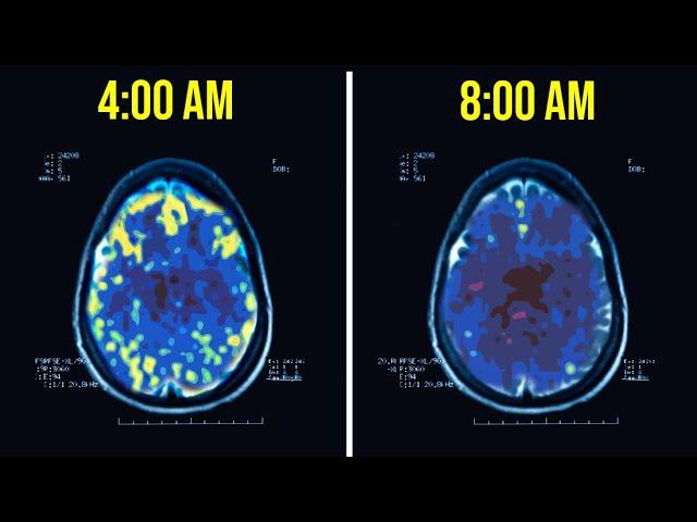[Bài lên luôn] Lý do tỷ phú ngủ dậy lúc 4h sáng: Não thành miếng bọt biển, giúp họ có lợi thế hơn hẳn người thường - Ảnh 1.