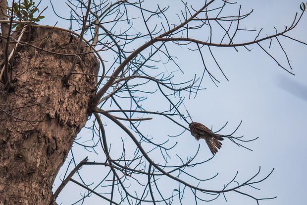 Những điều kì diệu nhỏ bé lấp lánh: Cư dân, công ty cây xanh ở Ecopark huy động xe cẩu chạy 10 km để giải cứu chú chim mắc trên cành cây - Ảnh 1.
